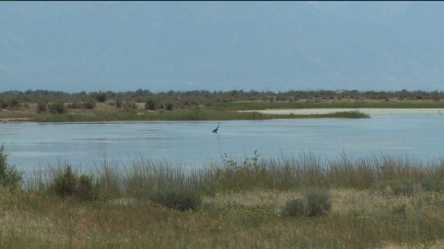 Proposed prison site next door to delicate bird habitat, environmentalists say