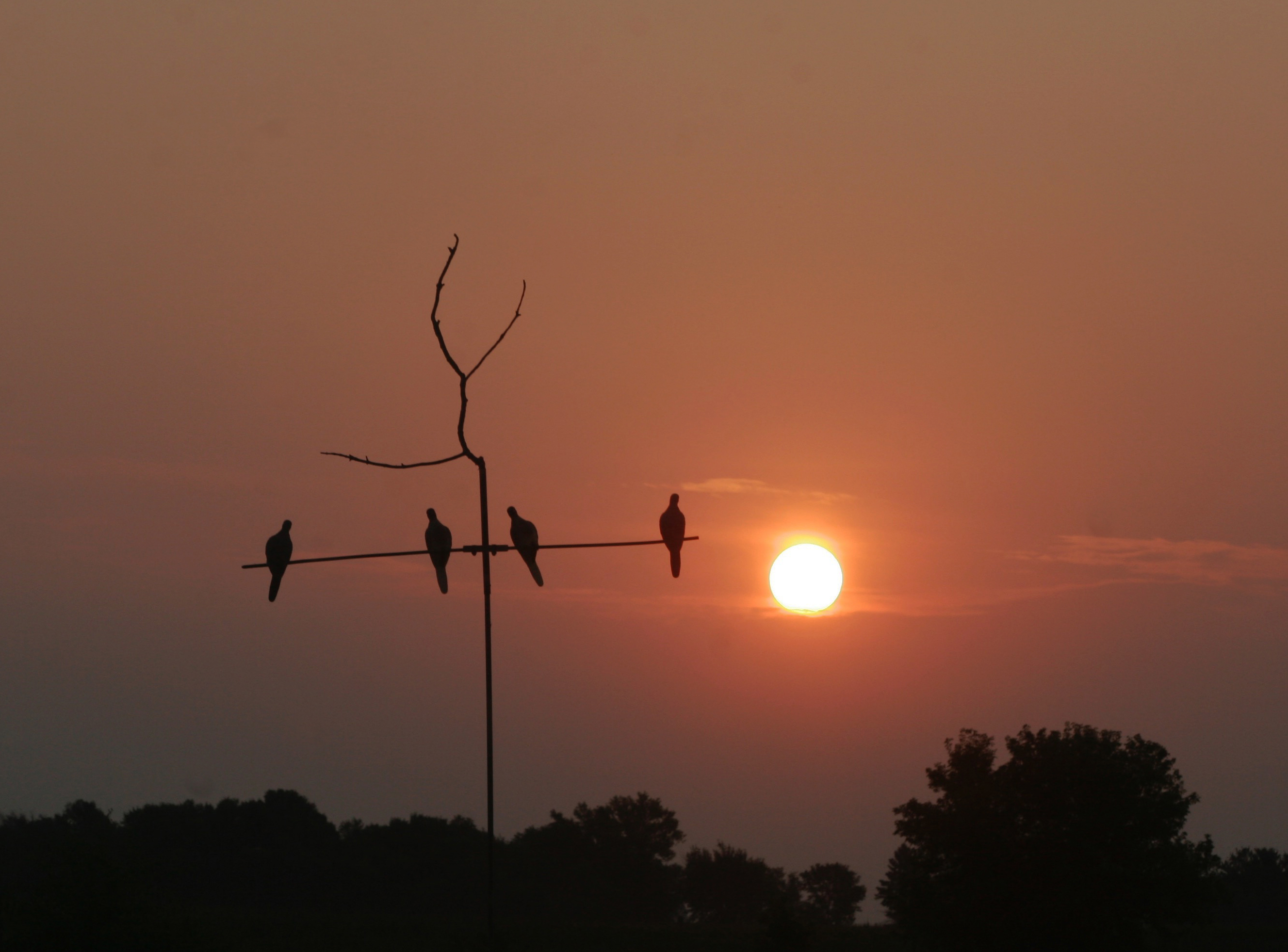 A hot hunt: Another mourning dove season opened with heat, humidity — and …