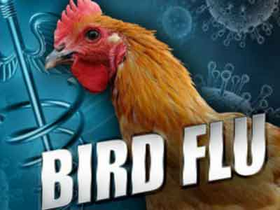 Young bird tenders blocked from fair circuit amid flu fear