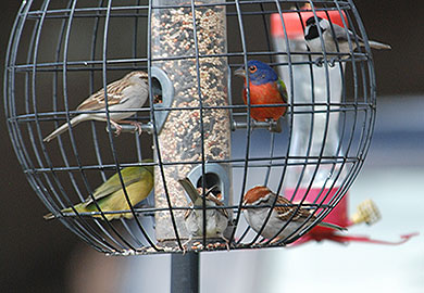 DNR offers guidelines to keep bird feeders clean, backyard birds safe