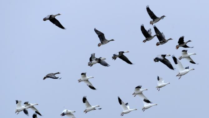 Federal Court: Intent Matters in Migratory-Birds Death