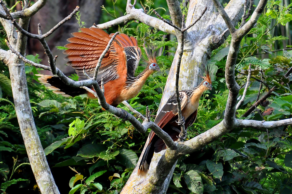 New study rearranges family tree of birds