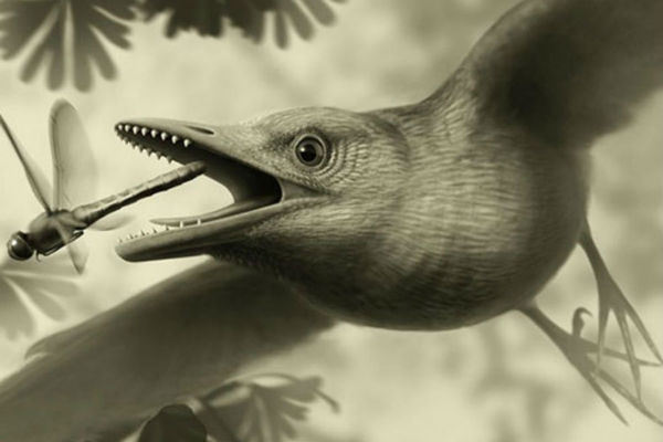 Did early birds fly? Fossil holds clues to ancient mystery.