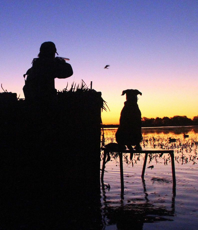 Recent rains bode well for birds, waterfowlers