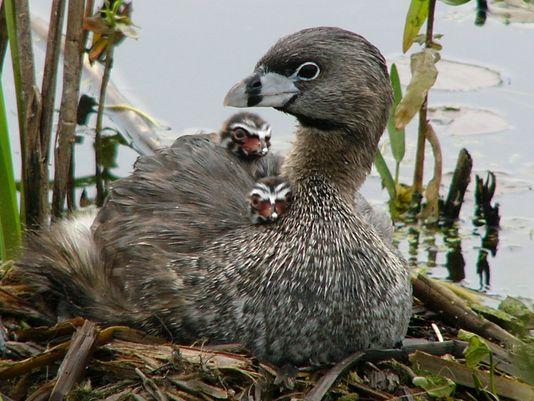 Dead birds dot Lake Ontario shoreline
