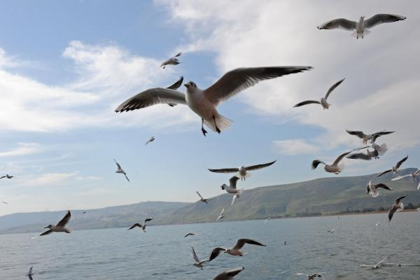 Study: Shifting climate dictated evolution of modern birds
