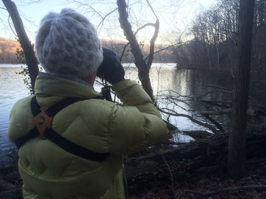 Volunteers tally Nashville birds in annual Christmas count