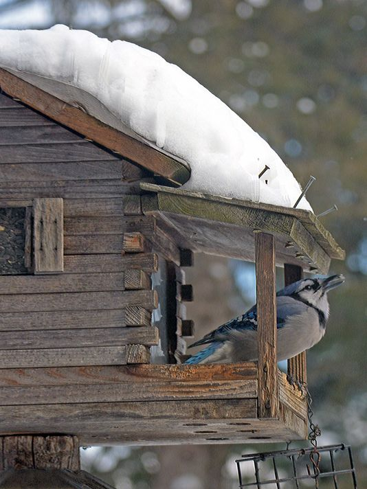 Durkin: Snow brings out the birds