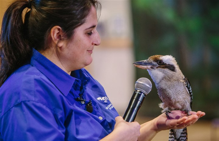 Birds soar indoors in new Aviary free-flight show