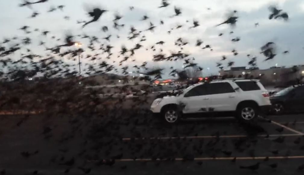 Video: Thousands of birds flock to metro parking lot