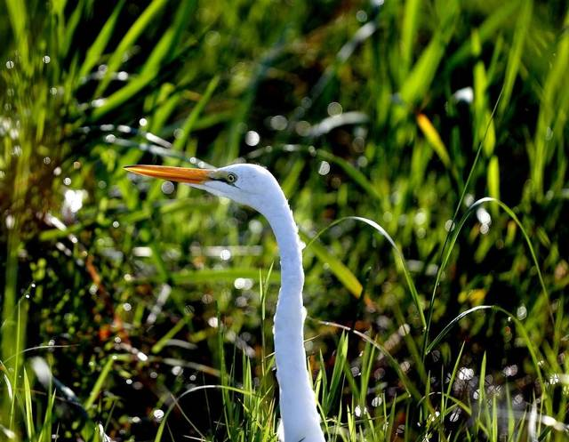 Everglades National Park has various bird walks open to the public through …