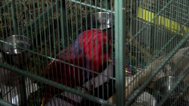 2 birds rescued from burning home in W. Houston