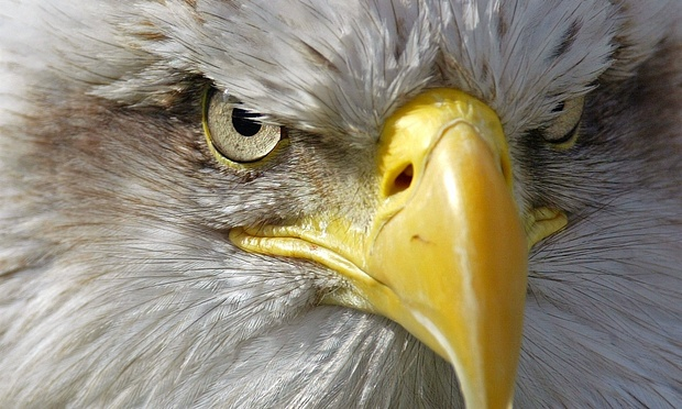 Eagle-eyed: Dutch police to train birds to take down unauthorized drones