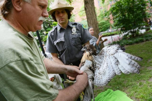 These FDNY firefighters save birds when not saving people