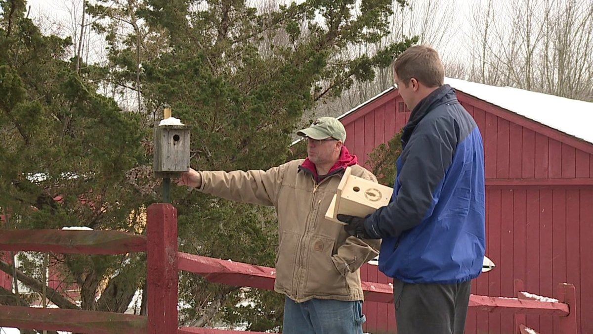 Bird Boxes Raise Money, Help Migrating Birds