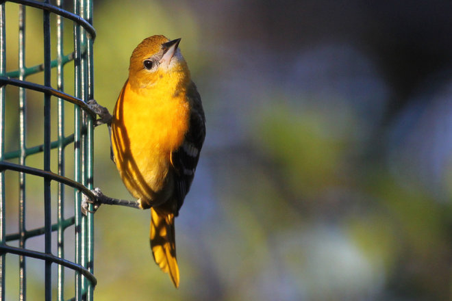 Diggin' In: Counting birds, counts during National Bird Feeding month
