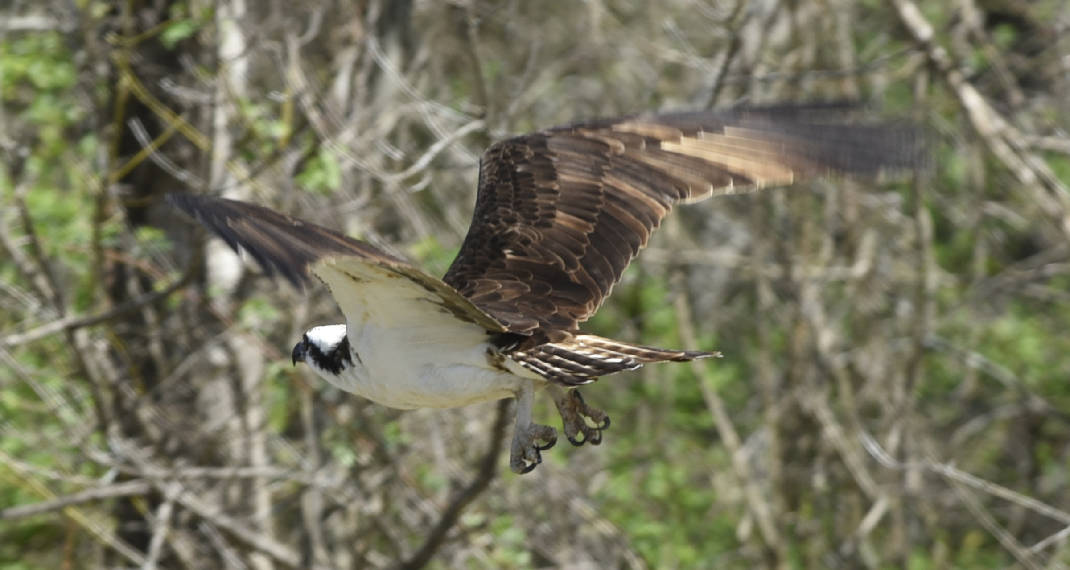 Chattanooga program showcases city's birds to public