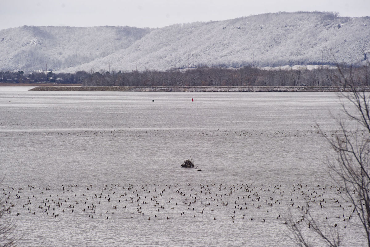 The birds are back in town: Eagles, pelicans, ducks migrating north on …