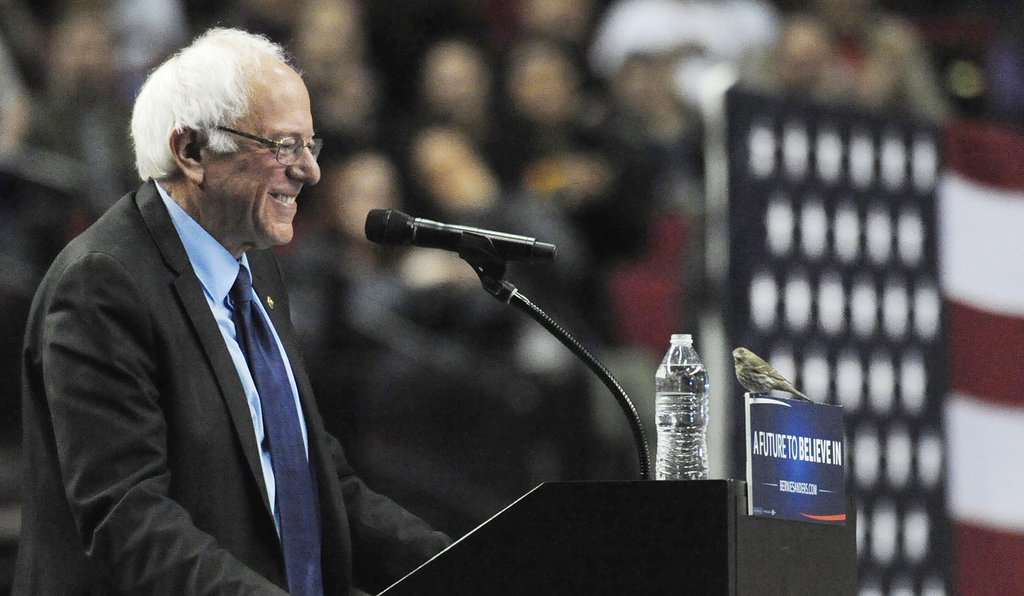 The Birds Have Spoken: Birdies For Bernie!