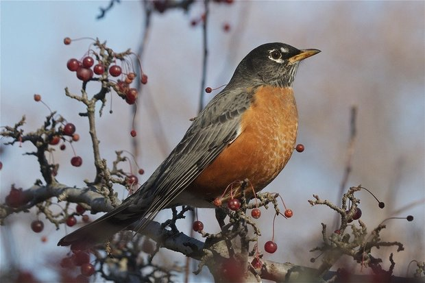 Did you notice fewer birds flew south this winter? Study blames climate change