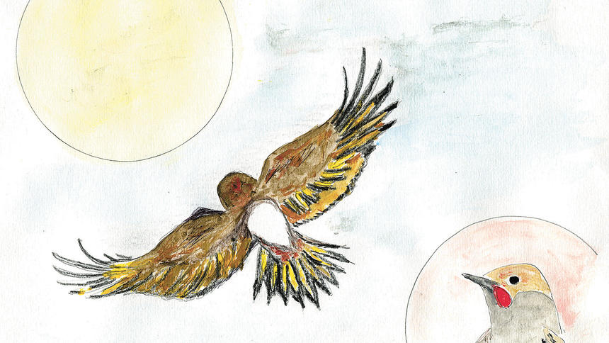 ALWAYS IN SEASON: Big road trip yields many birds