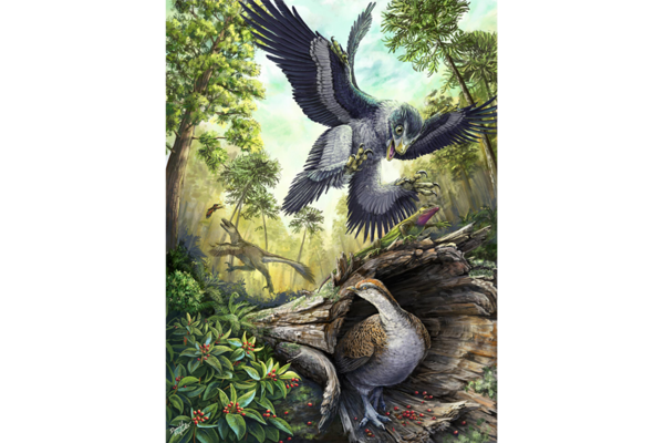 Did seeds help birds become the only remaining dinosaurs?