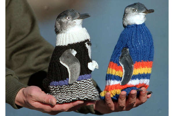 Penguin sweaters and other creative ways to help birds