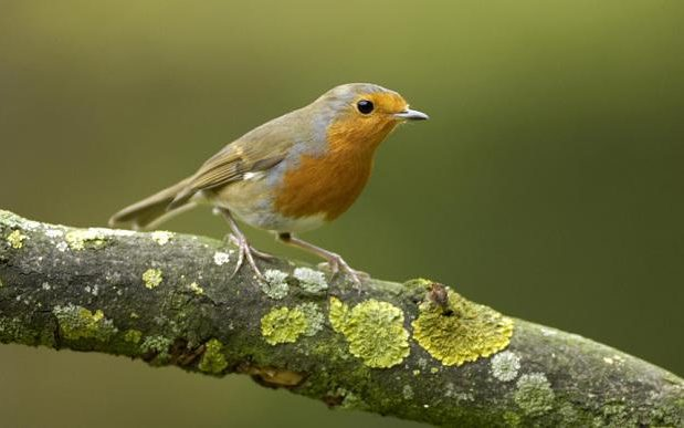 The 10 most common garden birds in Britain – how many can you identify?