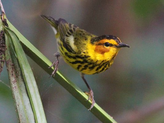 See several migrant birds before they leave