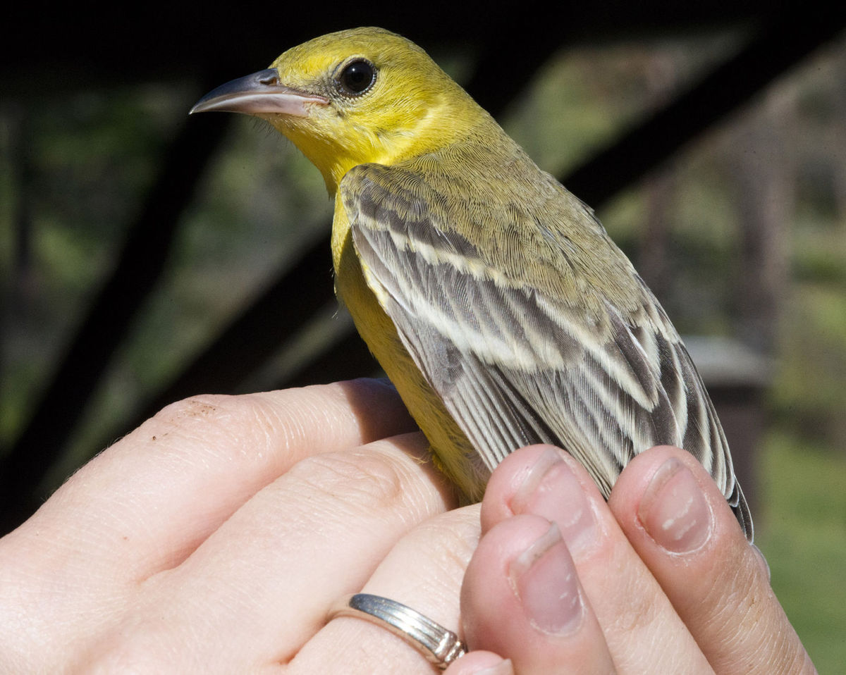 Celebrating birds and their benefits: May is Nebraska Migratory Bird Month
