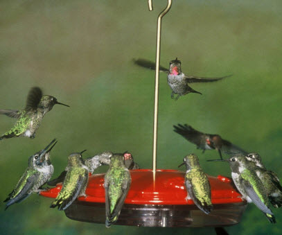 Aspects Hanging Hummingbird Feeder