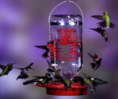 Best-1 Hummingbird Feeder