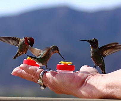 Mini Handheld Hummingbird Feeder