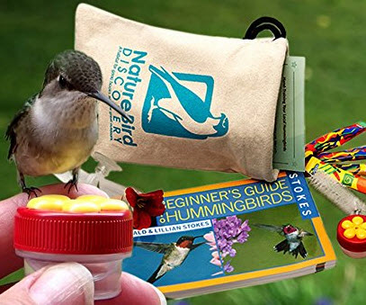 Hand Feeding Hummingbird Kit