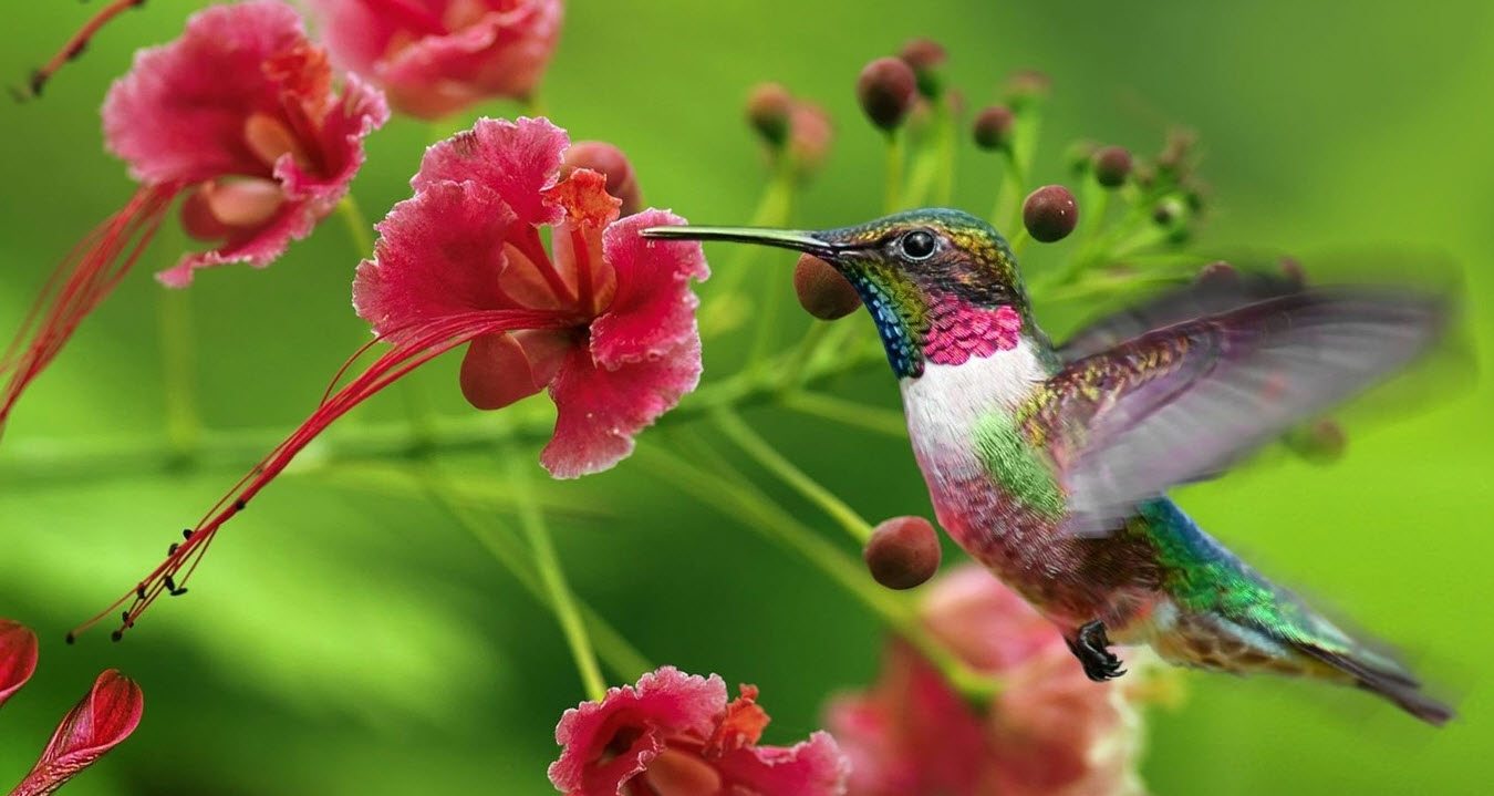 Hummingbird Eating