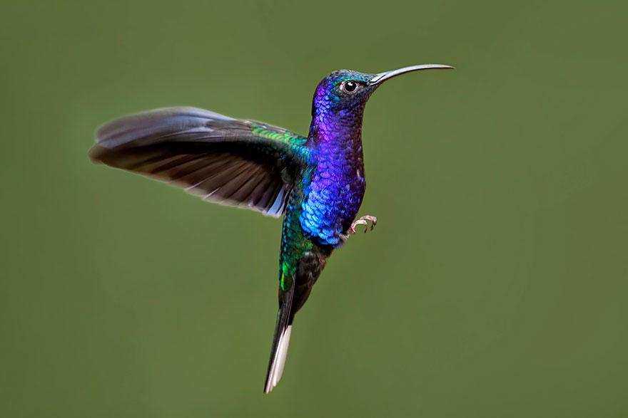 Hummingbird Dangers