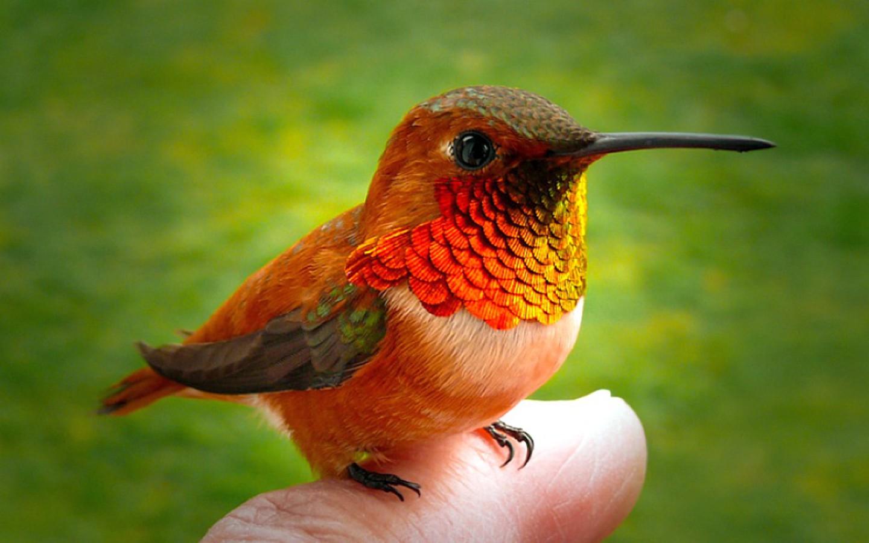 Cómo hacer un Hummingbird Nesting Area | Inicio Guías | Puerta SF
