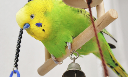10 Everyday Items That Are Toxic to Birds