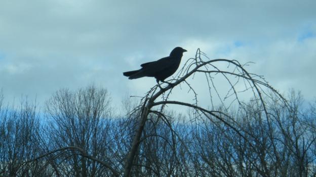 The birds that fear death