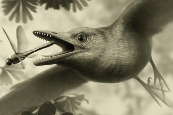 Study: Prehistoric birds could fly high