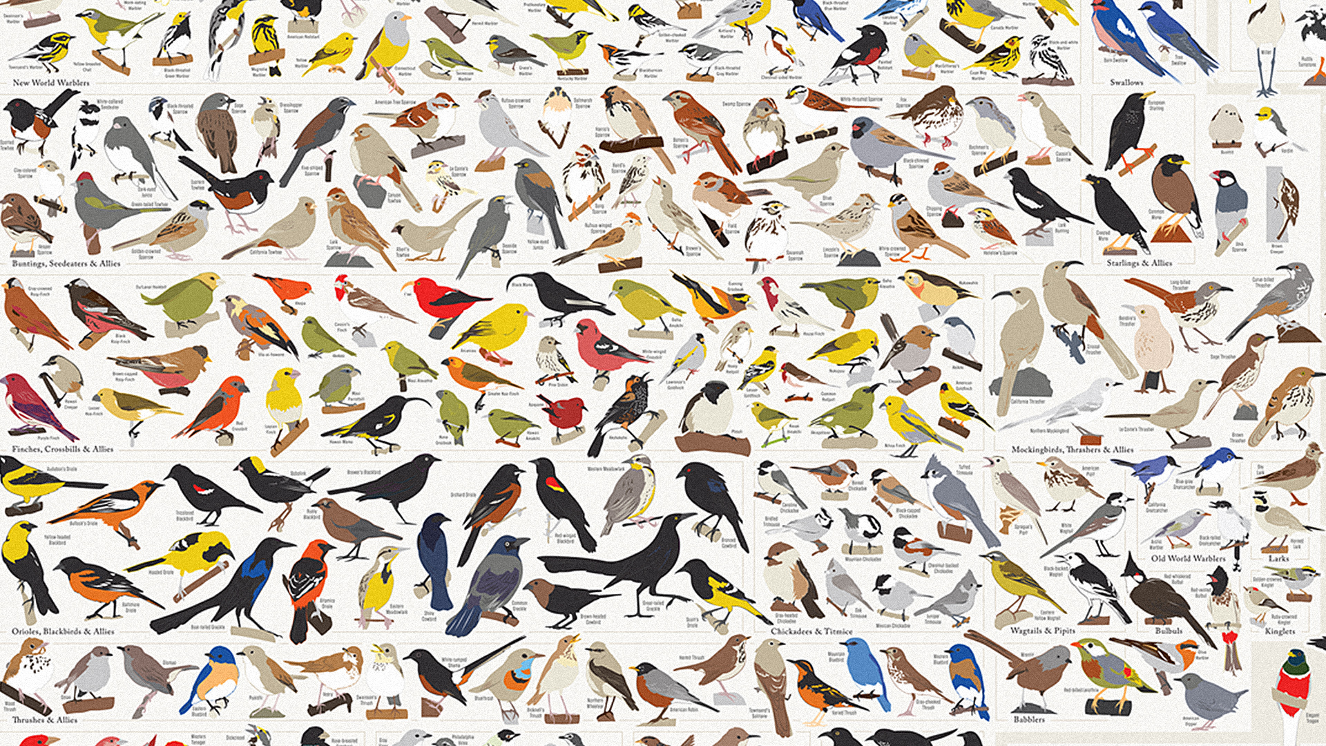 Infographic: 730 North American Birds In A Single Chart