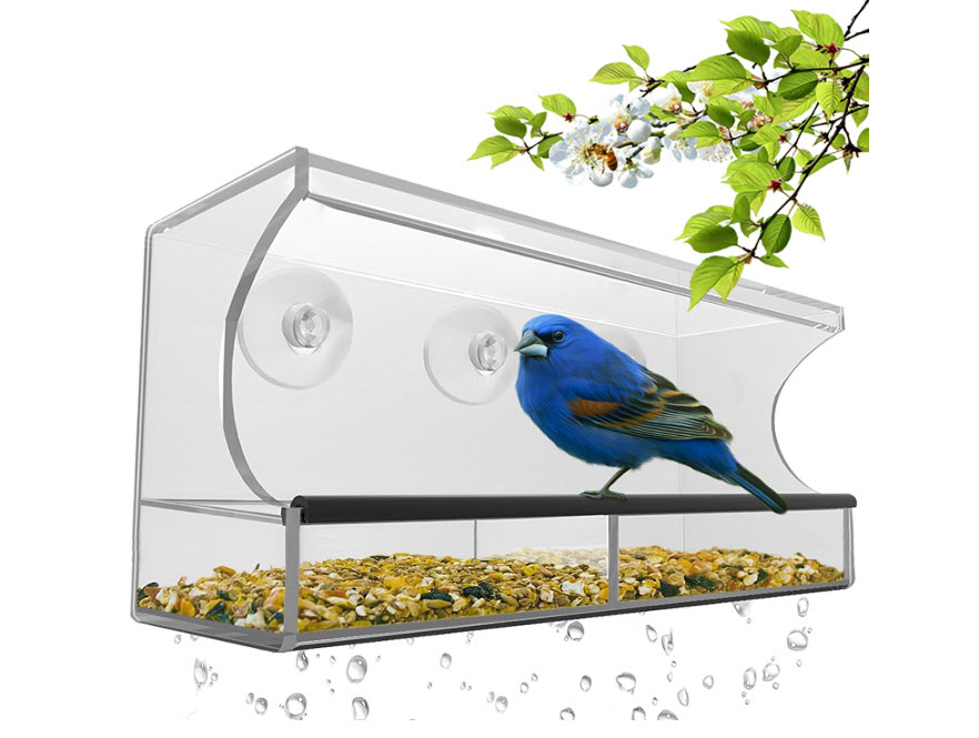 Best Window Bird Feeder for Wild Birds
