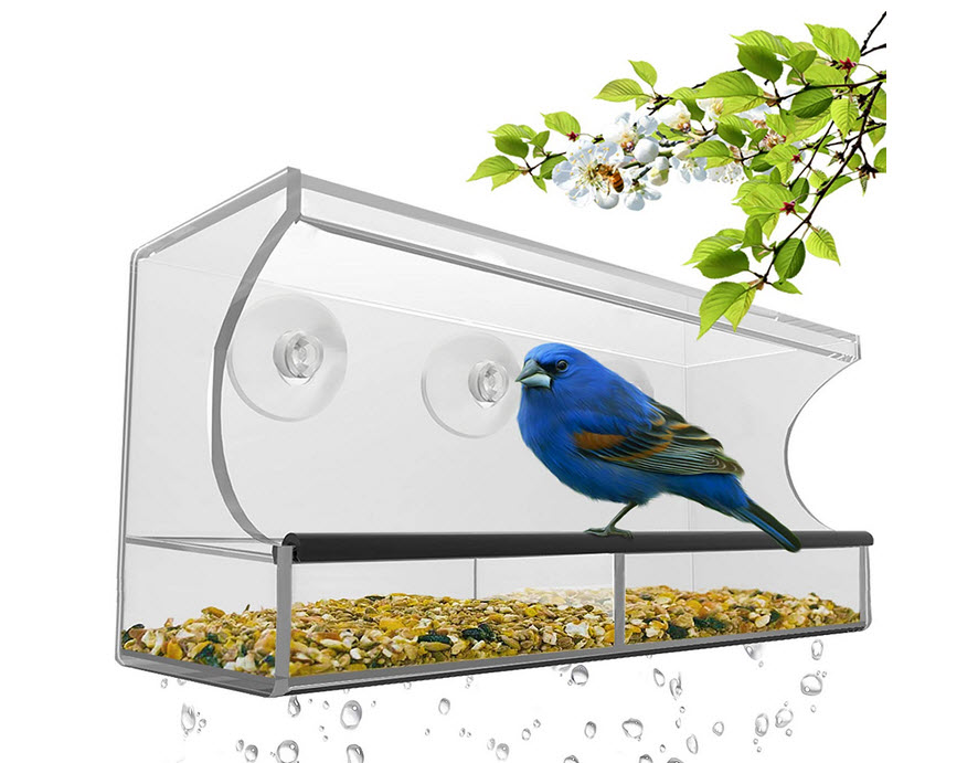 Best Window Bird Feeder with Strong Suction Cups