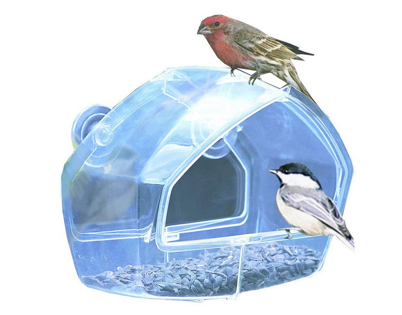 Birdscapes Clear Feeder 348