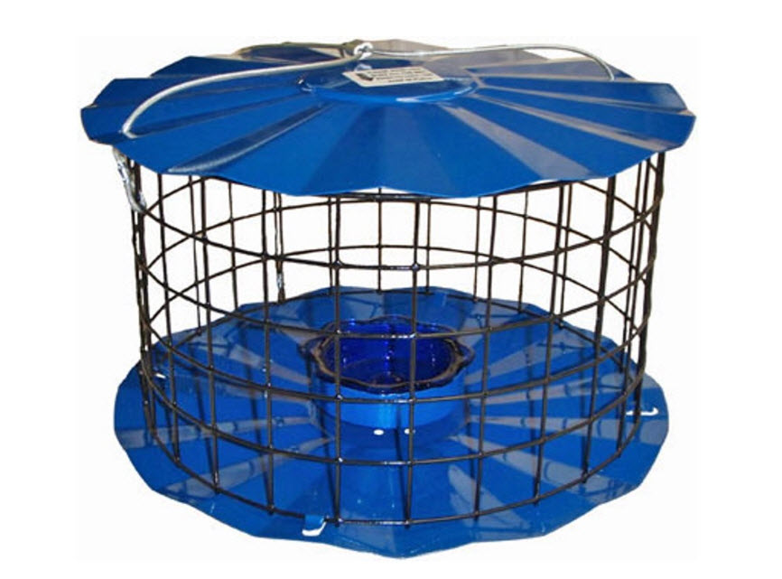 Bluebird Feeder - Designed to Keep Squirrels Out