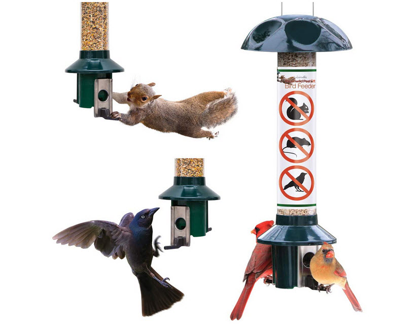 Roamwild Pestoff Squirrel Proof Wild Bird Feeder