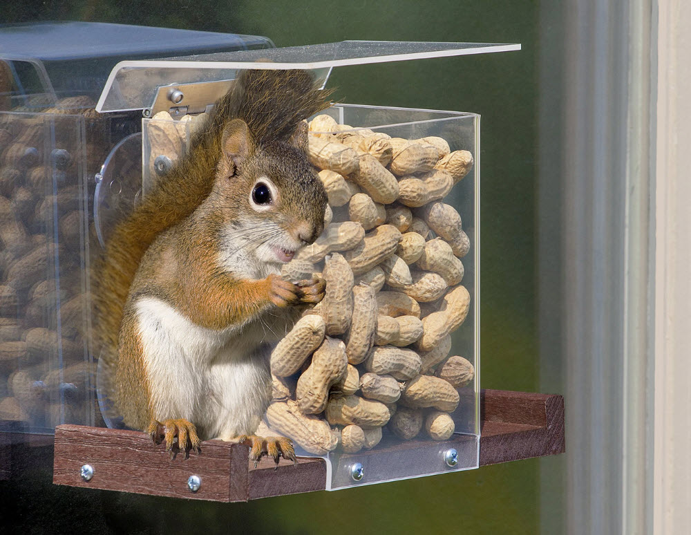 Top 10 Best Squirrel Feeders For 2021 Reviews Orbirds