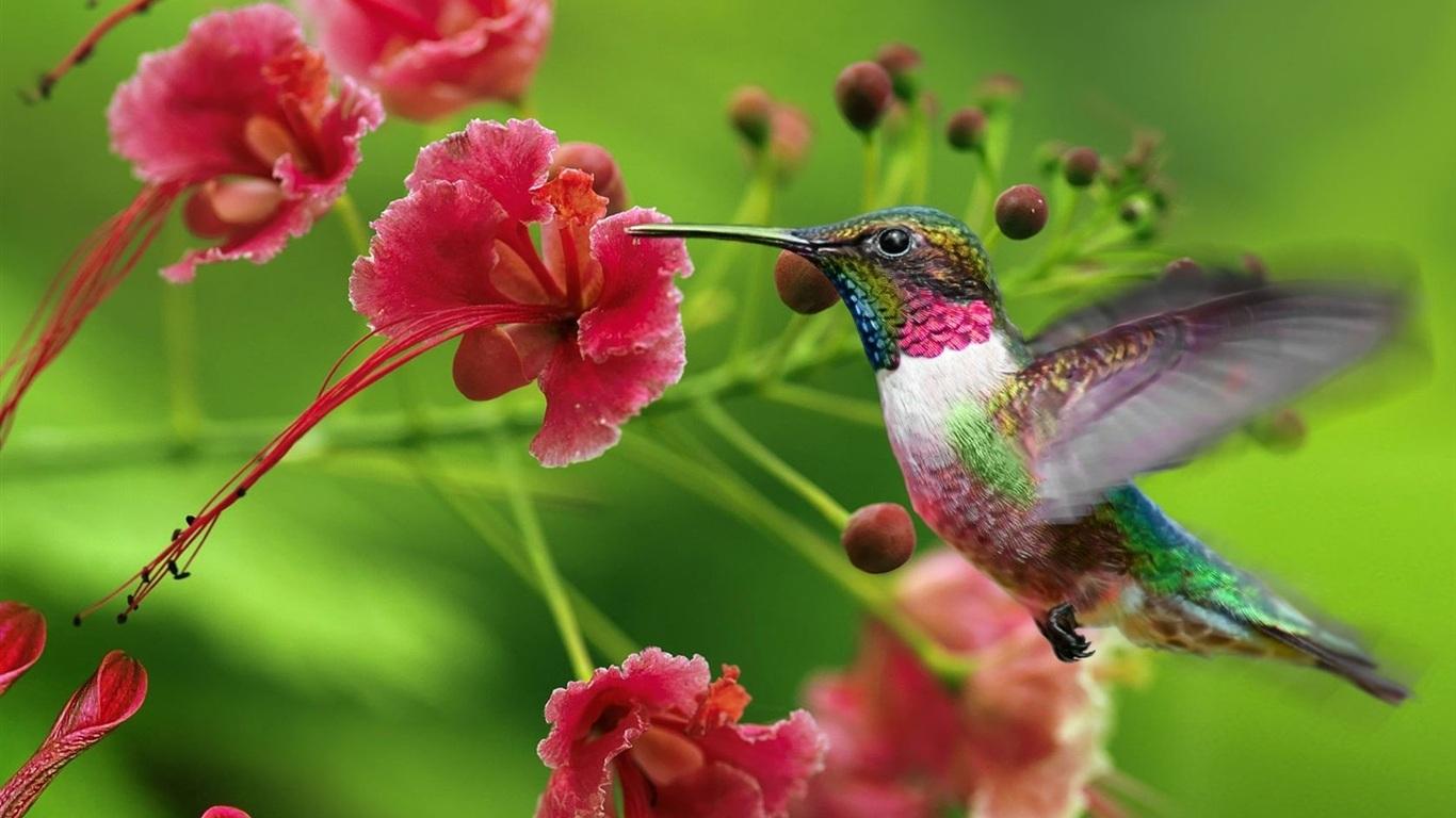Attracting Hummingbirds - Hummingbirds Plus