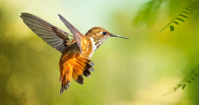 Full Life Cycle of a Hummingbird